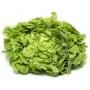 Laitue feuille chêne verte